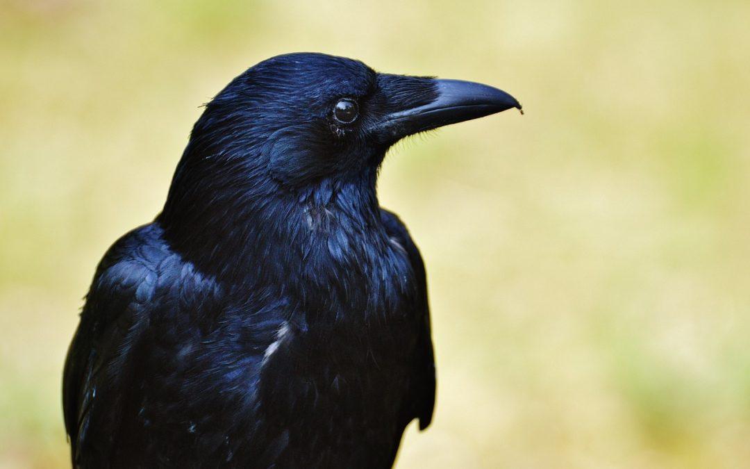 Le corbeau